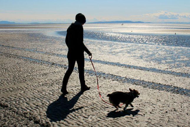 Co nepostrádat na procházce se psem?